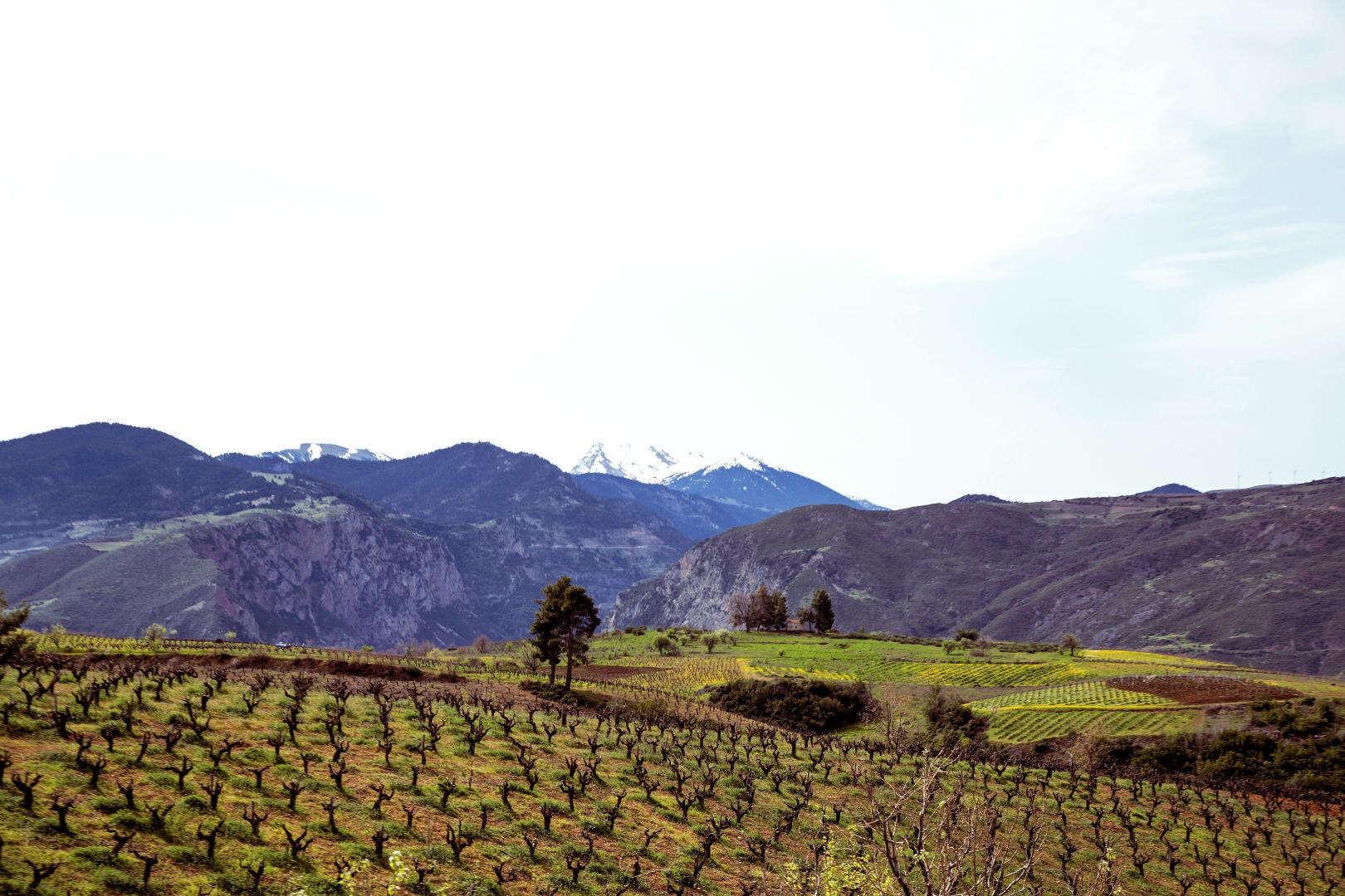acheon-winery-aigielaia-region-1-opt