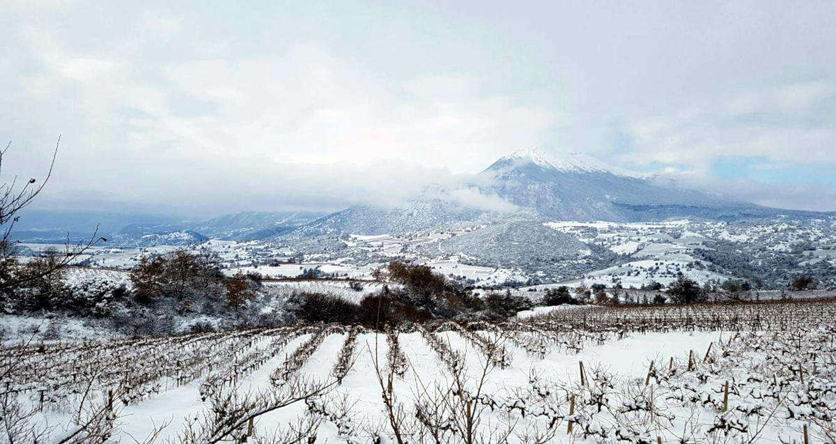 acheon-winery-aigialeia-our-vineyards-snow-opt